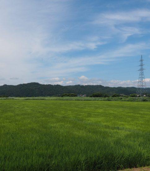 日本式=農耕方式サッカー